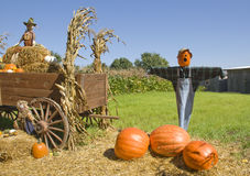 Scarecrows On Pumpkin Farm Royalty Free Stock Photo
