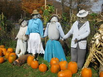 Scarecrows in a pumpkin patch. Four scarecrows stand with a row of pumpkins in a pumpkin patch Royalty Free Stock Photos
