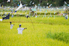 Scarecrows on rice field Stock Photography