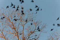 Scared birds. Prompt take-off from a tree of the scared birds Royalty Free Stock Photography