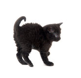 Scared black kitten Royalty Free Stock Photography