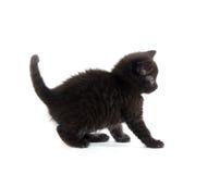 Scared black kitten Royalty Free Stock Image