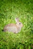 A scared bunny rabbit Stock Photos