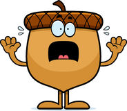 Scared Cartoon Acorn. A cartoon illustration of an acorn looking scared Royalty Free Stock Images