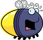 Scared Cartoon Firefly. A cartoon illustration of a firefly looking scared Royalty Free Stock Photography