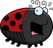 Scared Cartoon Ladybug Royalty Free Stock Photo
