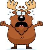 Scared Cartoon Moose Royalty Free Stock Image