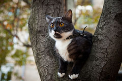 A scared cat on a tree Royalty Free Stock Photography