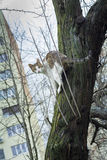 Scared cat in a tree near a building Stock Image