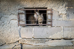 Scared cats behind bars Stock Photography