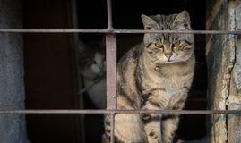 Scared cats behind bars Royalty Free Stock Photos