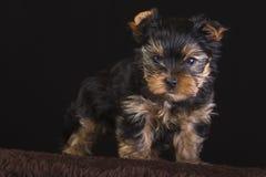 Scared dog. Stock Photography
