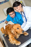 Dog at the vet Royalty Free Stock Photography