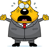 Scared Fat Cat Stock Photo