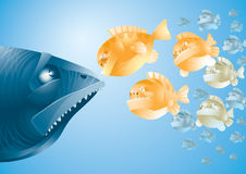 Scared_fish. A big scared fish against little fishes Stock Photos