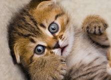 Scared kitten royalty free stock images