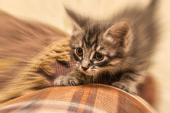 Scared kitten hiding at home. Stock Photo
