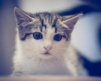 Scared kitten hiding at home Royalty Free Stock Photos