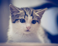 Scared kitten hiding at home Stock Photography