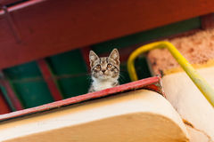 Scared kitten watching from above Royalty Free Stock Images