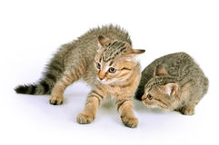 Scared Kittens Royalty Free Stock Photos