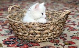 Scared kitty Stock Photos