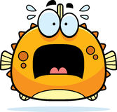 Scared Little Blowfish Stock Photos
