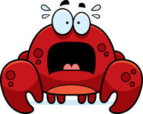 Scared Little Crab Stock Photo