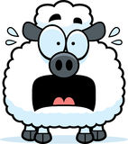 Scared Little Lamb Royalty Free Stock Image