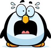 Scared Little Penguin Stock Image