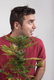 Scared man with Cannabis plant Stock Photos