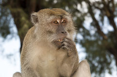 Scared monkey. Closeup shoot of monkey in bright sunny day royalty free stock photo