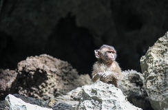 Scared monkey in Thailand Royalty Free Stock Photo