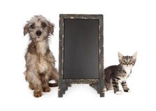 Scared Rescue Puppy and Kitten Blank Chalkboard Royalty Free Stock Images