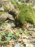 Scared stray dog hiding under tree stock photos