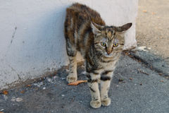 Scared street cat Stock Photography