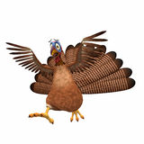 Scared Toon Turkey. A cartoon turkey running scared with his wings in the air. Isolated on a white background Royalty Free Stock Image
