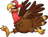 Scared turkey Stock Photo