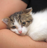 Scared unhappy kitten snuggled Royalty Free Stock Photos