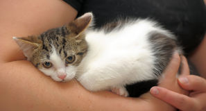 Scared unhappy kitten snuggled. Frightened poor little kitten snuggled Royalty Free Stock Photography
