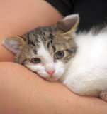 Scared unhappy kitten snuggled. Frightened poor little kitten snuggled Royalty Free Stock Images
