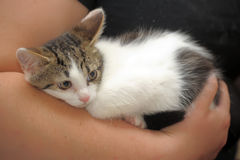 Scared unhappy kitten snuggled. Frightened poor little kitten snuggled Stock Images