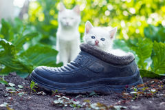 Scared white kitten sitting in old boot Royalty Free Stock Photos