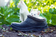 Scared white kitten sitting in old boot Stock Image