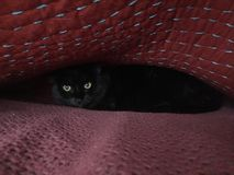 Scaredy猫 库存照片