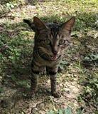 Scaredy borttappad katt royaltyfria bilder