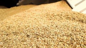 Scaricando grano, fine su archivi video