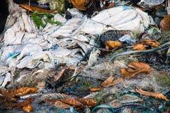 Scarichi la foto del sito per la promozione di riciclano il progetto Fotografie Stock Libere da Diritti