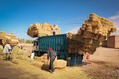 Scarico dei mucchi di fieno da un camion Skoura morocco Fotografia Stock Libera da Diritti