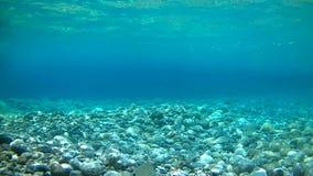 Scario - fondo del mar de la bahía del francés almacen de video